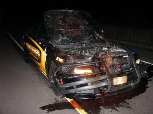 Поліцейський зіткнувся з оленем на швидкості 180 км/год
