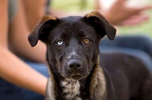 У Комсомольську-на-Амурі створять памятник собаці Найді, яка чекала свого загиблого господаря 12 років